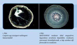 Maunawai élővíz, víz struktúra - Csikós Andrea